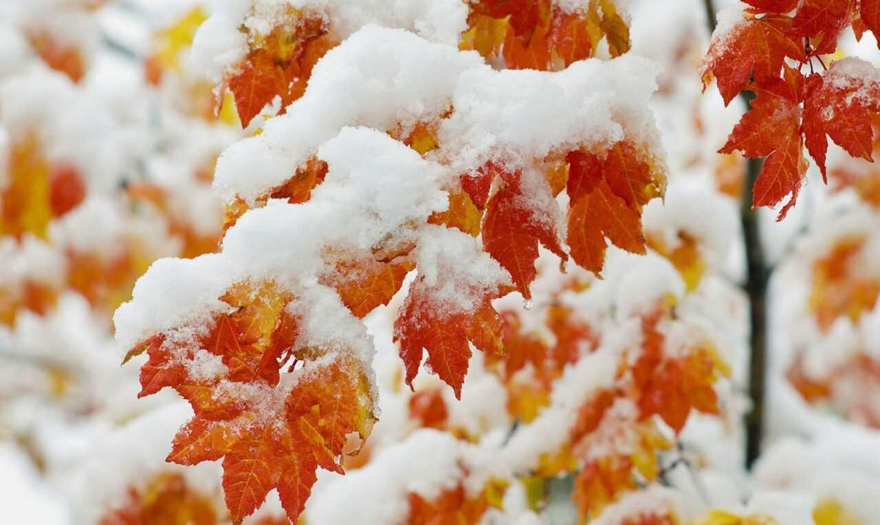 snegopad-1280x764.jpg